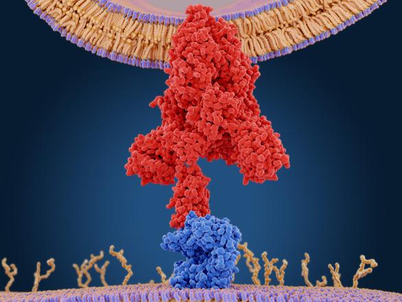 Chỉ cần một loại vắc xin ngừa COVID-19 vì virus đột biến rất ít